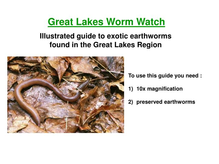 Great Lakes Worm Watch