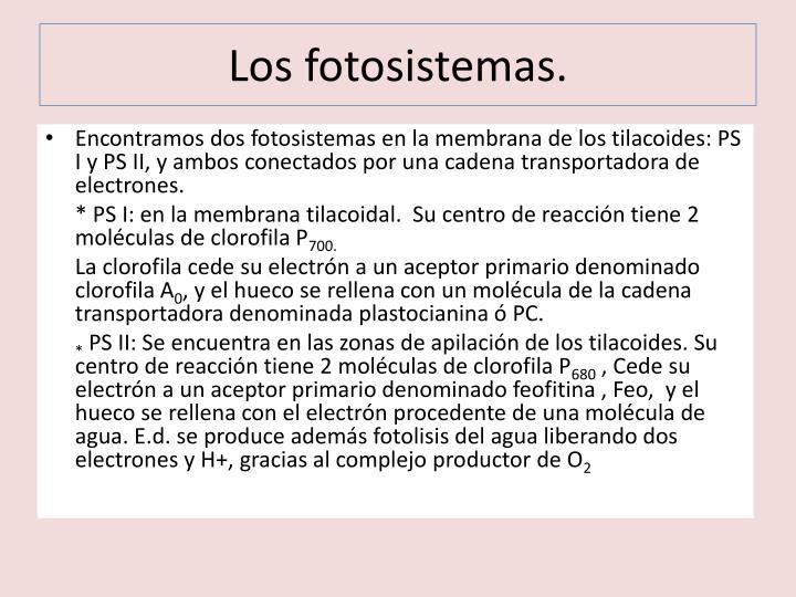 Los fotosistemas.
