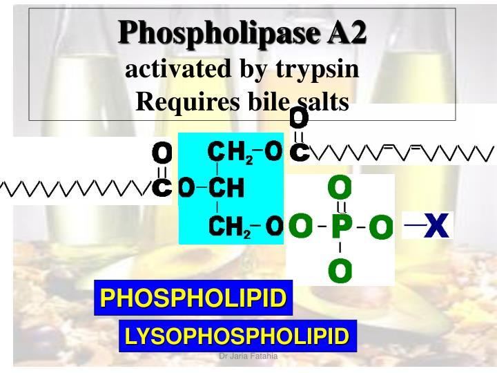 Phospholipase