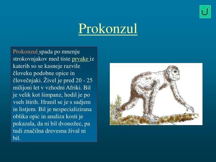 Prokonzul