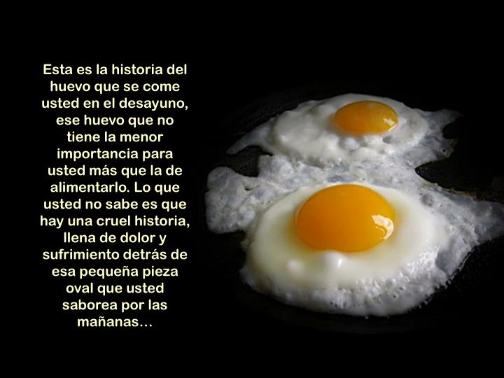 Esta es la historia del huevo que se come usted en el desayuno, ese huevo que no tiene la menor impo...