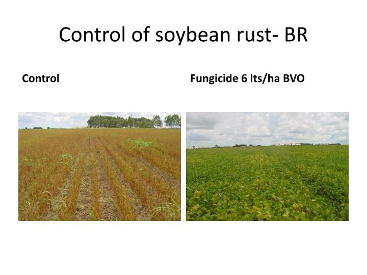 Control of soybean rust- BR