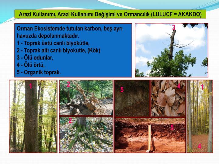 Arazi Kullanımı, Arazi Kullanımı Değişimi ve Ormancılık (LULUCF = AKAKDO)