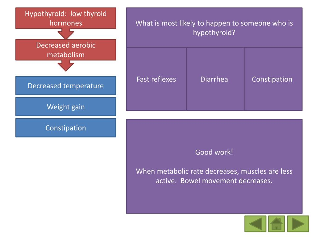 PPT - Thyroid Hormones and their control PowerPoint