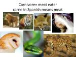 carnivore meat eater carne in spanish means meat