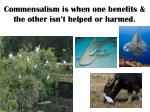 commensalism is when one benefits the other isn t helped or harmed