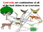 food webs are combinations of all of the food chains in an ecosystem