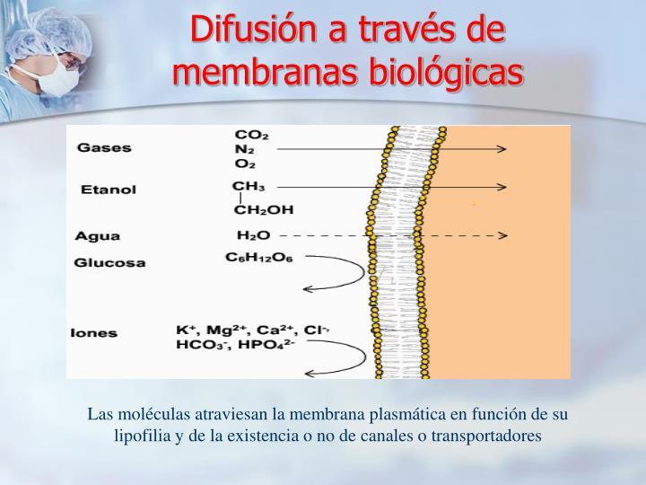 Difusión a través de membranas biológicas