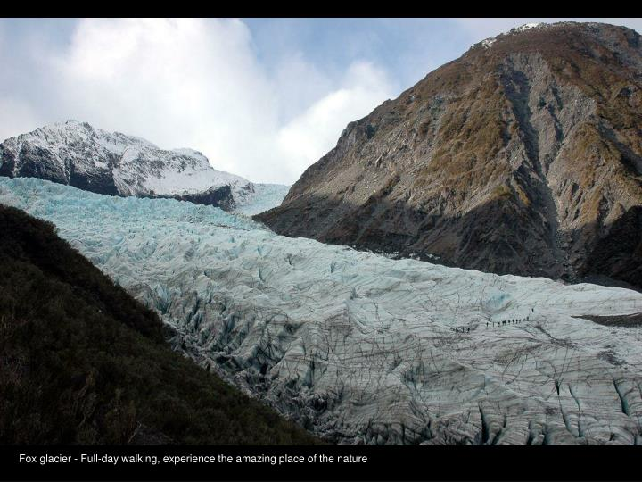 Fox glacier - Full-day walking, experience the amazing place of the nature