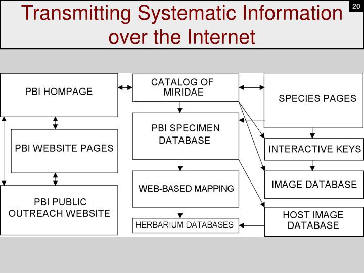 Transmitting Systematic Information over the Internet