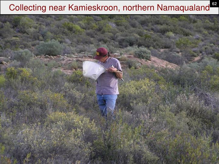 Collecting near Kamieskroon, northern Namaqualand