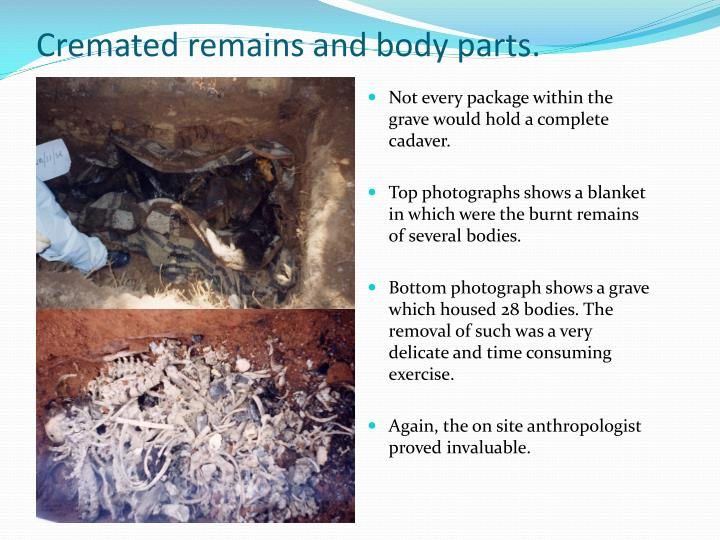 Cremated remains and body parts.