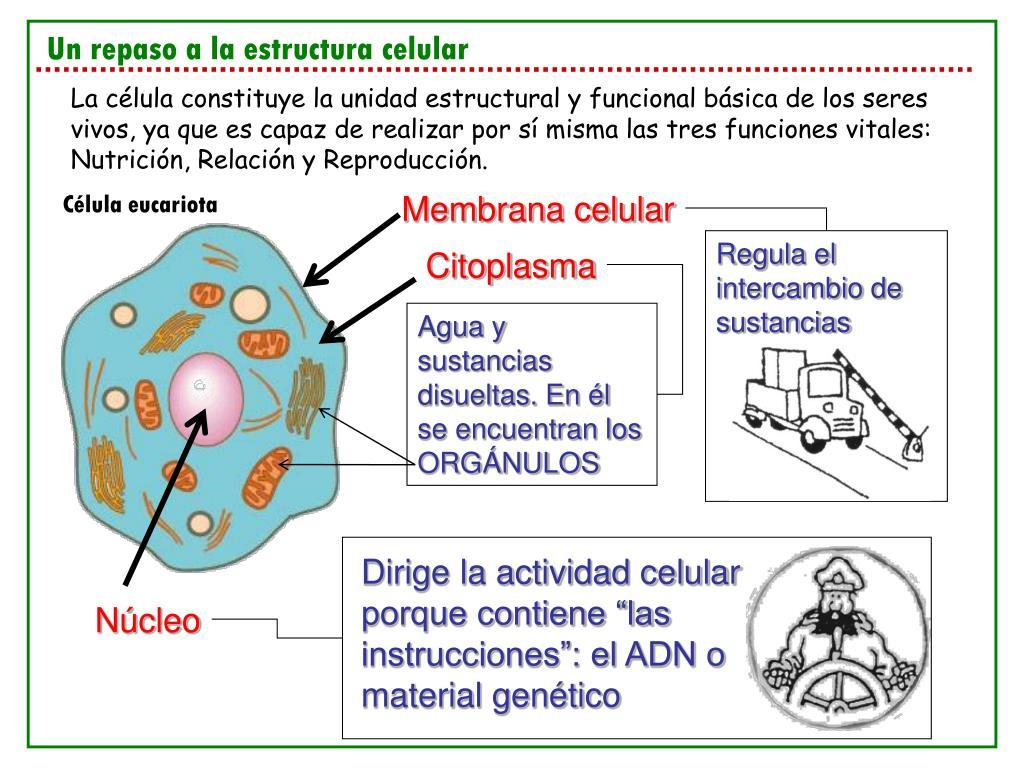 Ppt I E S Suel Fuengirola Departamento De Ciencias