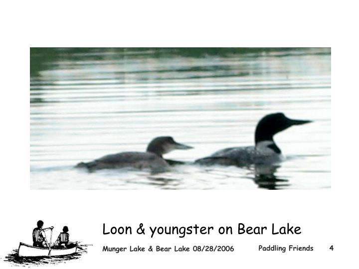 Loon & youngster on Bear Lake