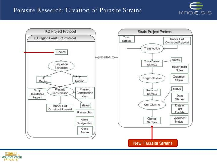 Parasite research creation of parasite strains