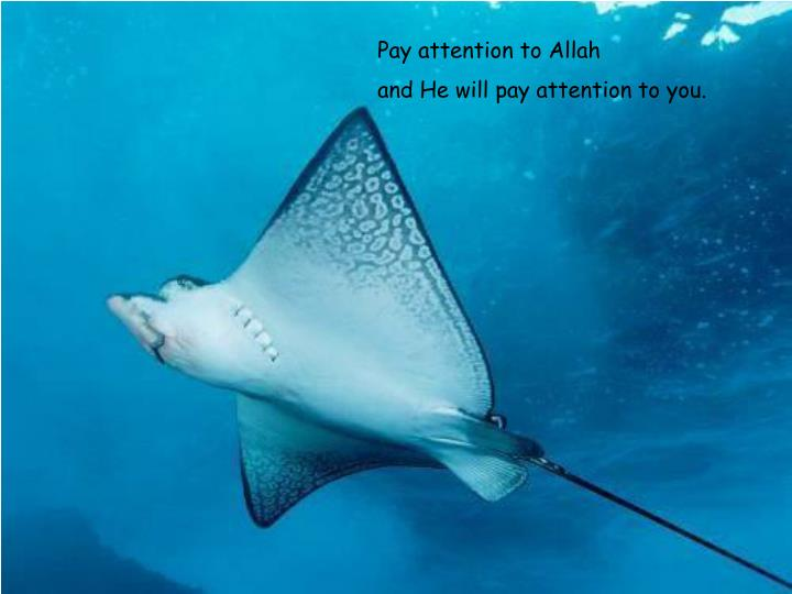 Pay attention to Allah