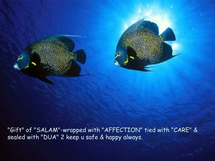 """""""Gift"""" of """"SALAM""""-wrapped with """"AFFECTION"""" tied with """"CARE"""" & sealed with """"DUA"""" 2 keep u safe & happy always."""
