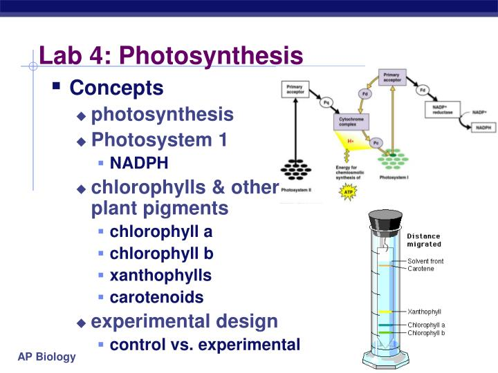 photosythesis experiments Photosynthesis is vital for the life of plants and for all animals on the planet explore the requirements for photosynthesis experiments.