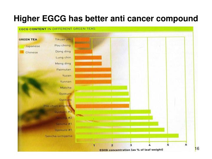 Higher EGCG has better anti cancer compound