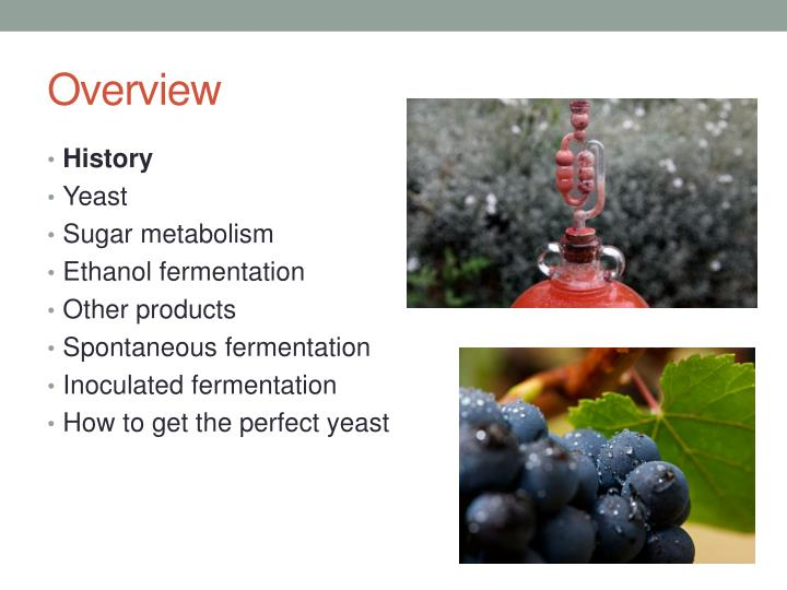 yeast fermentation 2 essay Yeast fermentation lab essay ethanol fermentation is a system in which hydrogen ions from nadh + h+ are broken down in order to release the trapped energy and regenerate nad+ in the absence of a mitochondria or oxygen ethanol is formed, which is typically found in bacteria and some yeast.