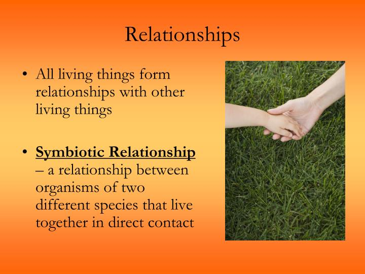 a look at symbiotic relationships between organisms Examines symbiotic relationships between prokaryotes and other organisms examines symbiotic relationships in which prokaryotes usually live in close association with larger organisms where they can help, harm or have no effect.
