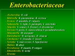 enterobacteriaceae1