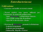 enterobacteriaceae2