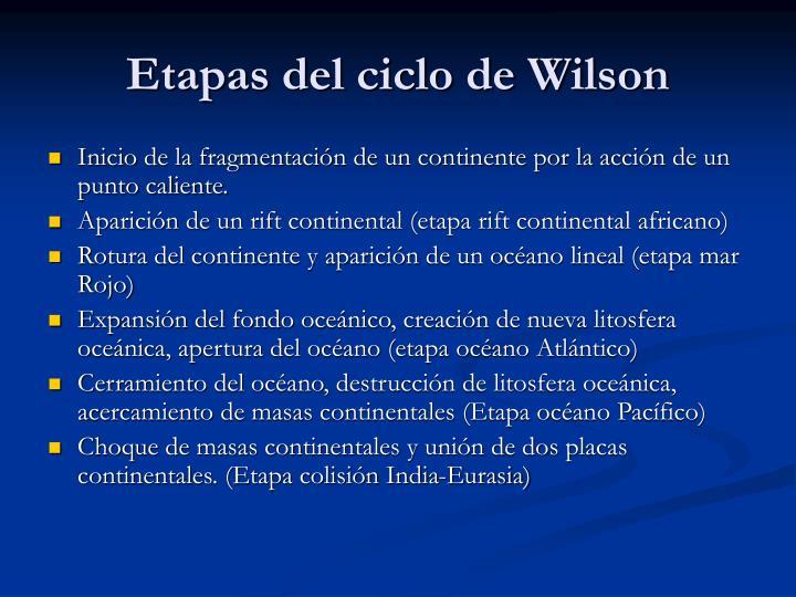Etapas del ciclo de Wilson