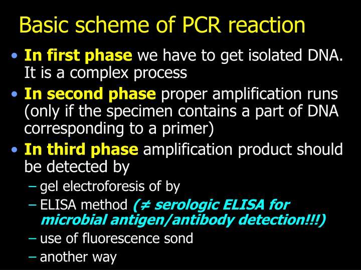 Basic scheme of PCR reaction