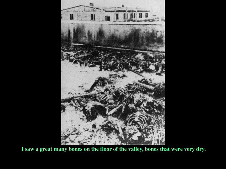 I saw a great many bones on the floor of the valley, bones that were very dry.