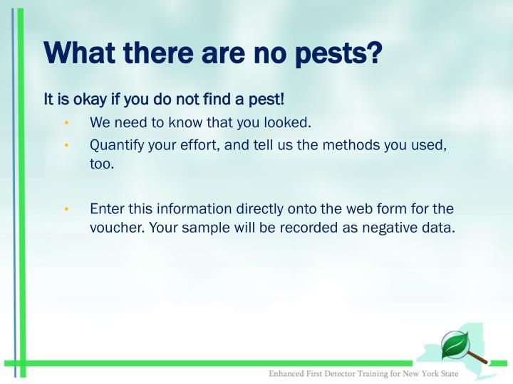 What there are no pests?