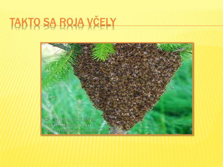 TAKTO SA ROJA Včely