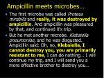 ampicillin meets microbes