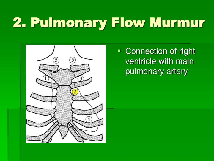2. Pulmonary Flow Murmur