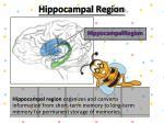 hippocampal region