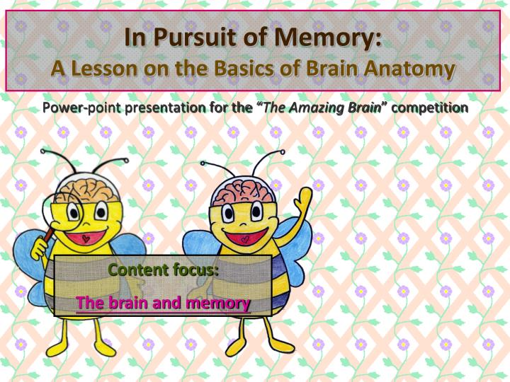 in pursuit of memory a lesson on the basics of brain anatomy n.