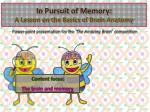 in pursuit of memory a lesson on the basics of brain anatomy