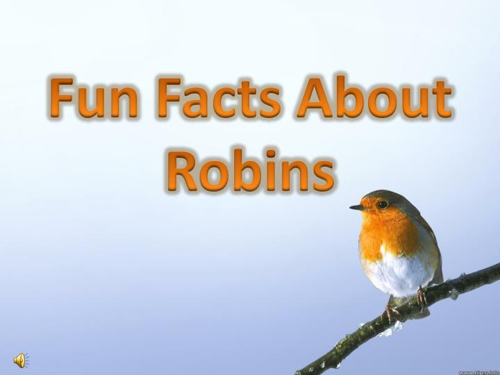 fun facts about robins n.