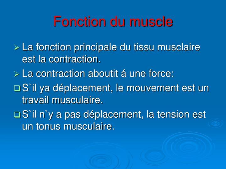 Fonction du muscle