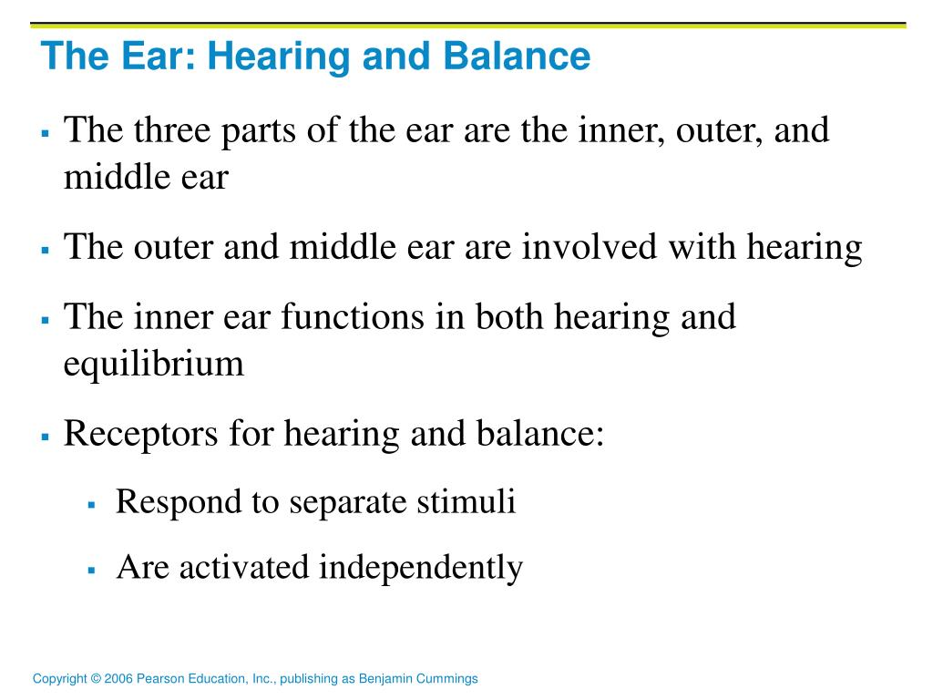 PPT - The Ear: Hearing and Balance PowerPoint Presentation - ID:4876110