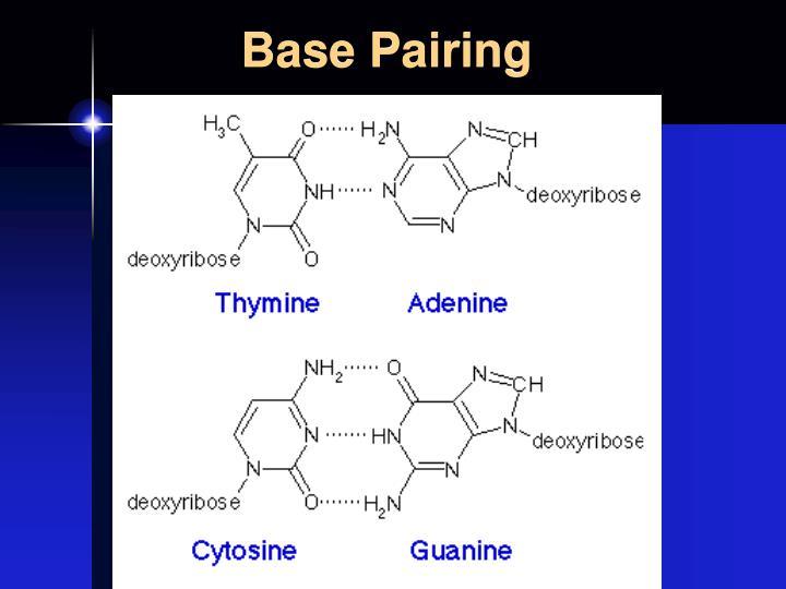 Base Pairing