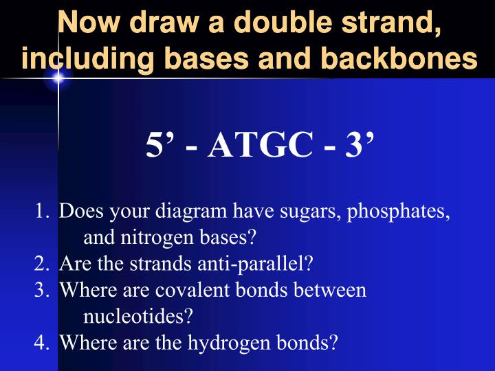 Now draw a double strand, including bases and backbones