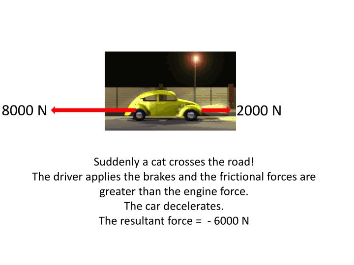 Suddenly a cat crosses the road!