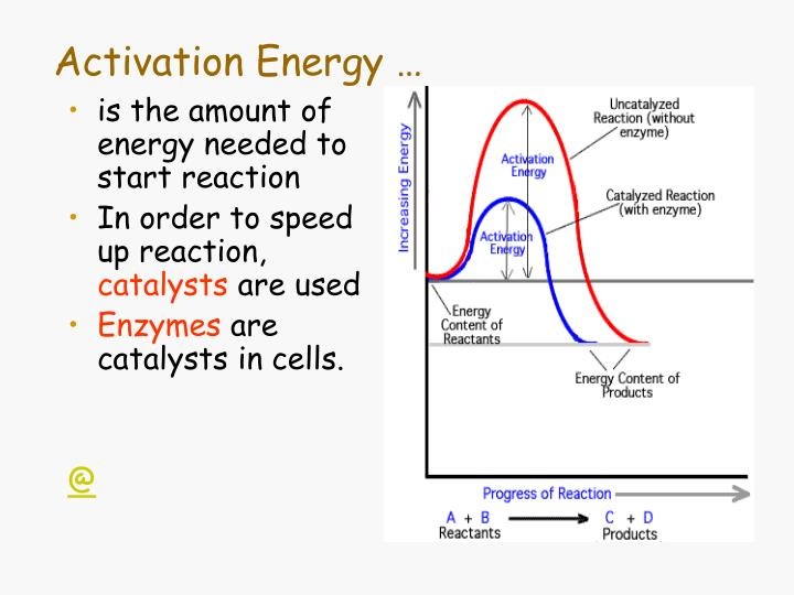 activation energy the activation energy of a react chegg com