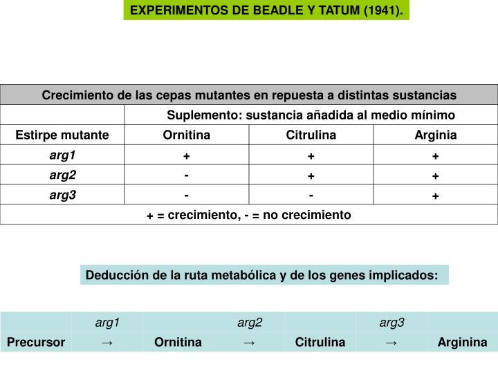 EXPERIMENTOS DE BEADLE Y TATUM (1941).