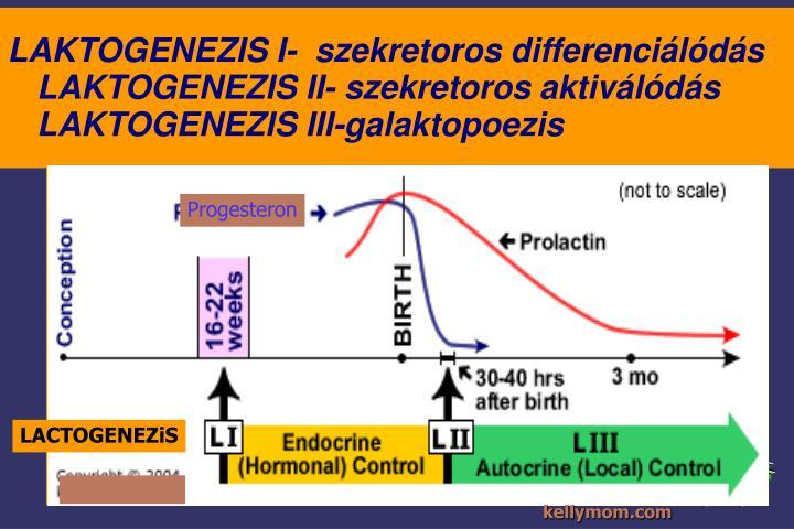 LAKTOGENEZIS I-  szekretoros differenciálódás