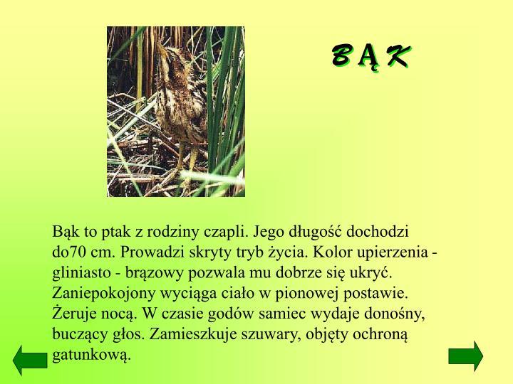 B Ą K