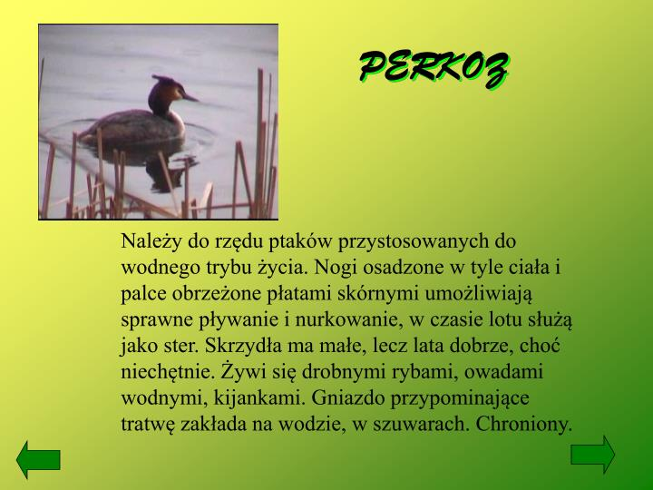 PERKOZ