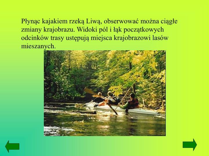 Płynąc kajakiem rzeką Liwą, obserwować można ciągłe zmiany krajobrazu. Widoki pól i łąk początkowych odcinków trasy ustępują miejsca krajobrazowi lasów mieszanych.