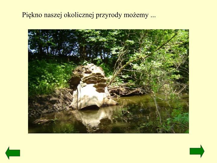 Piękno naszej okolicznej przyrody możemy ...